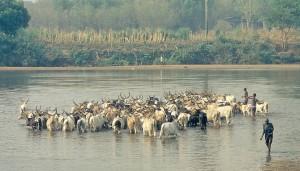 Ануак со своим скотом.