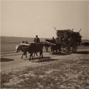 Ассирийские беженцы движутся на новое место жительство к реке Кабур, в Сирии, 1939.